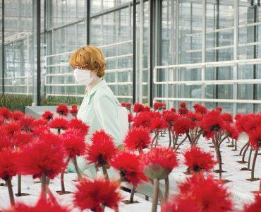 Alice mit Mundschutz in mitten einer Menge von Little Joe Pflanzen