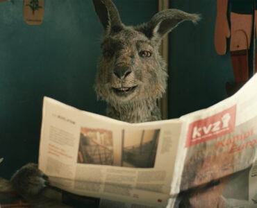 Das Känguru ließt Zeitung und wirkt wenig Interessiert
