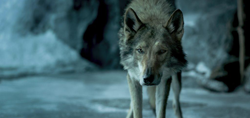 """Alpha spürt die Anwesenheit von Gefahr in """"Alpha"""""""