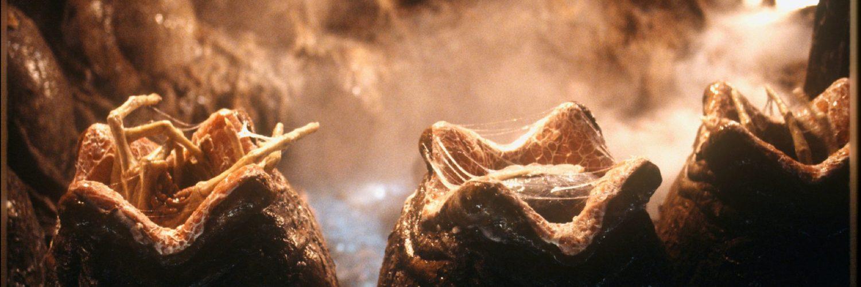 Die Alien-Eier öffnen sich.