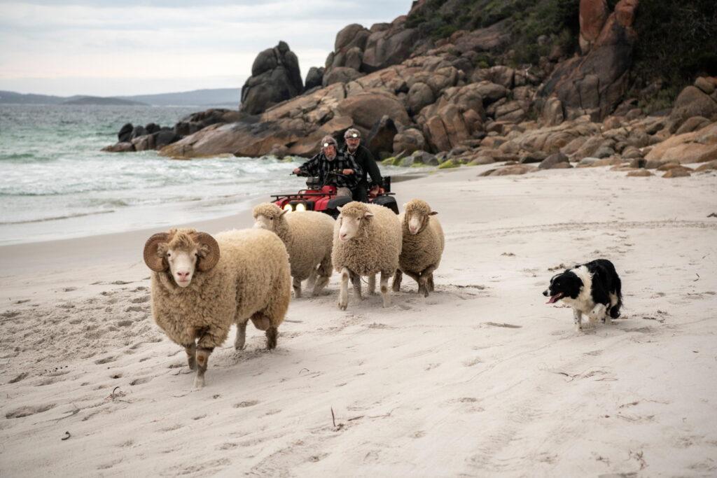 Die Brüder treiben auf der Flucht ihre letzten Schafe über einen Strand.