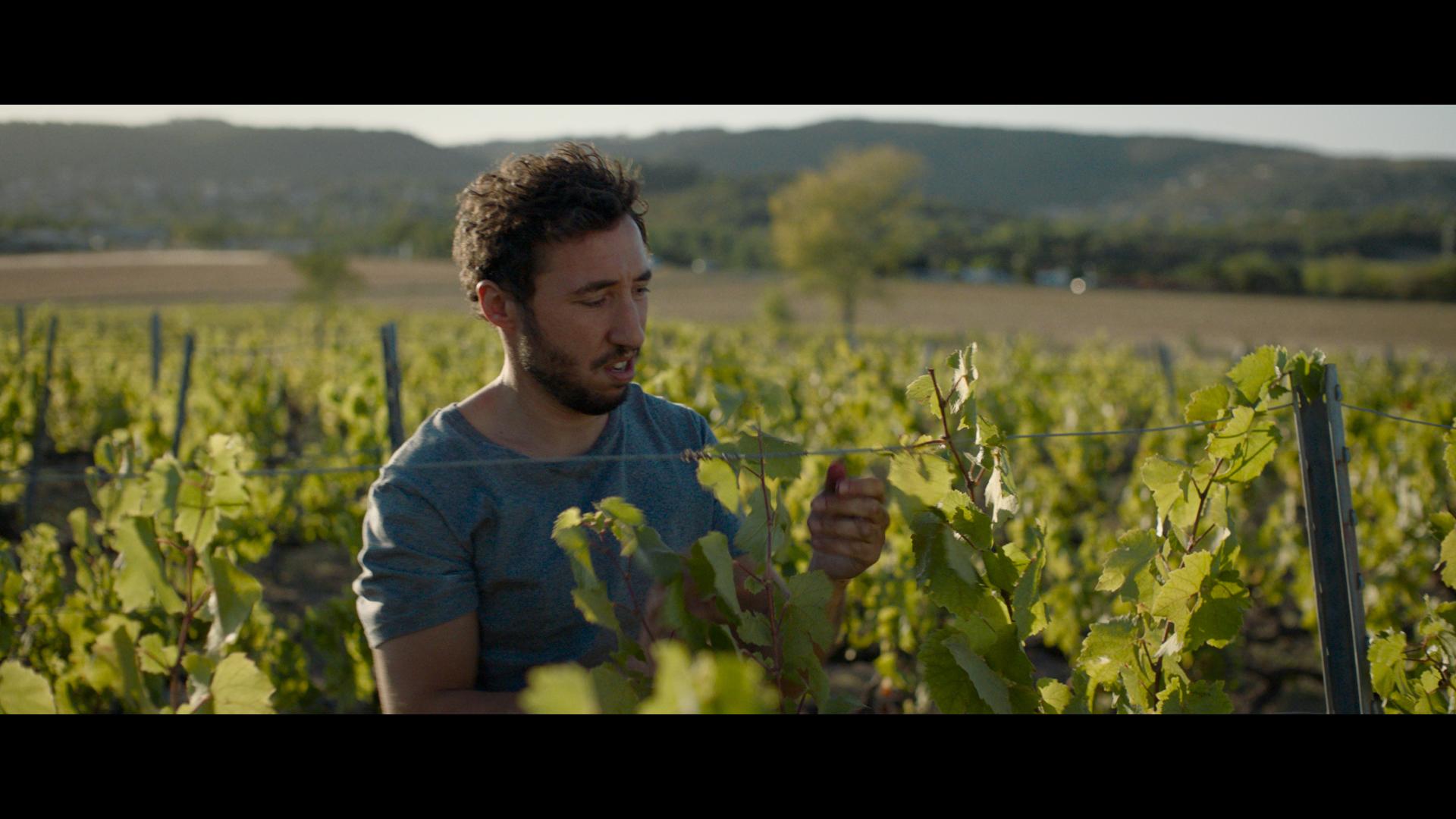 Ein Mann mit blauem Shirt zwischen Weinreben beim Weinlesen - Schwarm der Schrecken