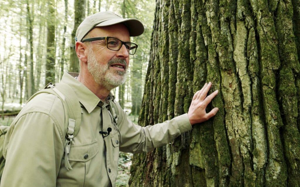 Peter Wohlleben berührt den kräftigen Stamm eines gesunden Baums.
