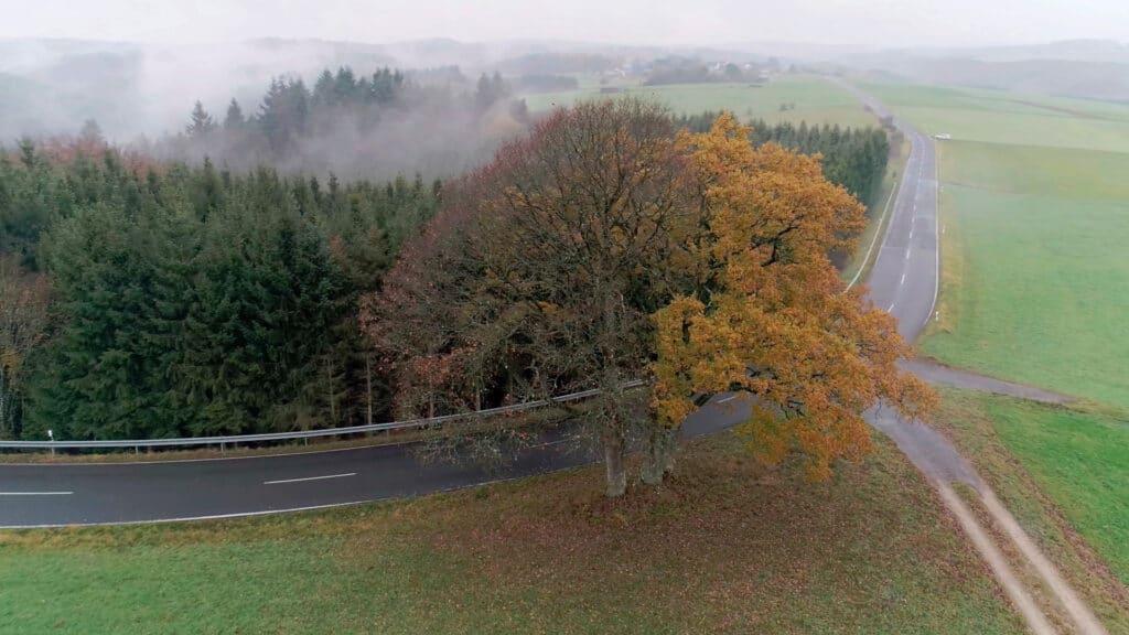 Drei Bäume stehen an einem Standort an einer Landstraße dicht beeinander. Während der linke bereits alle Blätter abgeworfen hat, tragen die anderen noch ihr Laub.