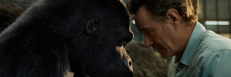 Der einzig wahre Ivan (in der originalen Fassung mit der Stimme von Sam Rockwell) und Mack (gespielt von Bryan Cranston) sitzen sich gegenüber. Dabei haben beide den Kopf leicht gesenkt, so dass sich ihre Stirn beinahe berühren. Macks Blick richtet sich dabei weiter auf Ivan, während der Blick des Gorillas auf Macks Brust fällt.