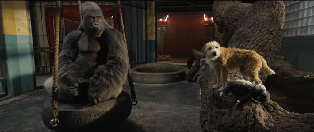 Auf dem Bild sieht man den Gorilla Ivan und seinen besten Freund den streunenden Hund Bob in Ivans Gehege. Ivan sitzt auf einer Reifenschaukel und Bob steht zu seiner Rechten auf einem Baumstumpf. Vor Bob liegt ein Gorilla-Plüschtier. Im Hintergrund sind auf dem Boden eine Art Wasserbecken zu sehen und dahinter ein roter Vorhang, der zur Manege führen könnte.