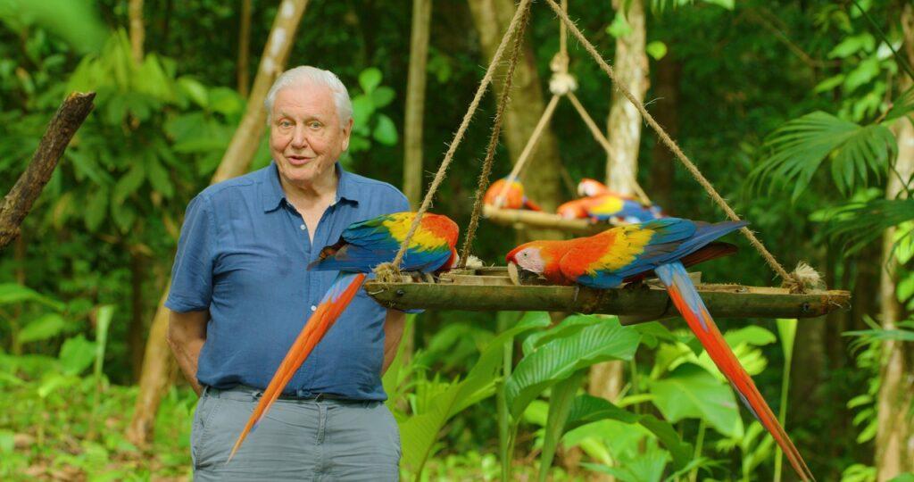 Richard Attenborough bei der Fütterung von Aras - Neu auf Netflix im April 2021