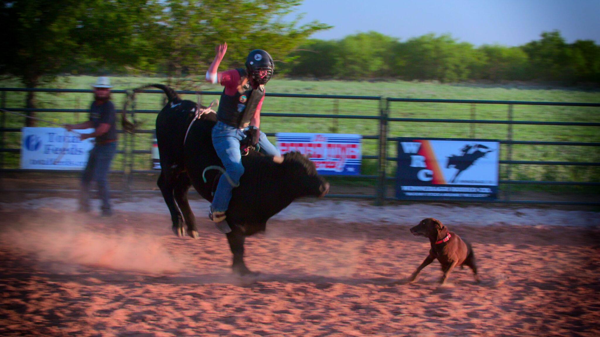 Ein Rodeoreiter auf einem Stier in einem Ring mit einem Hund