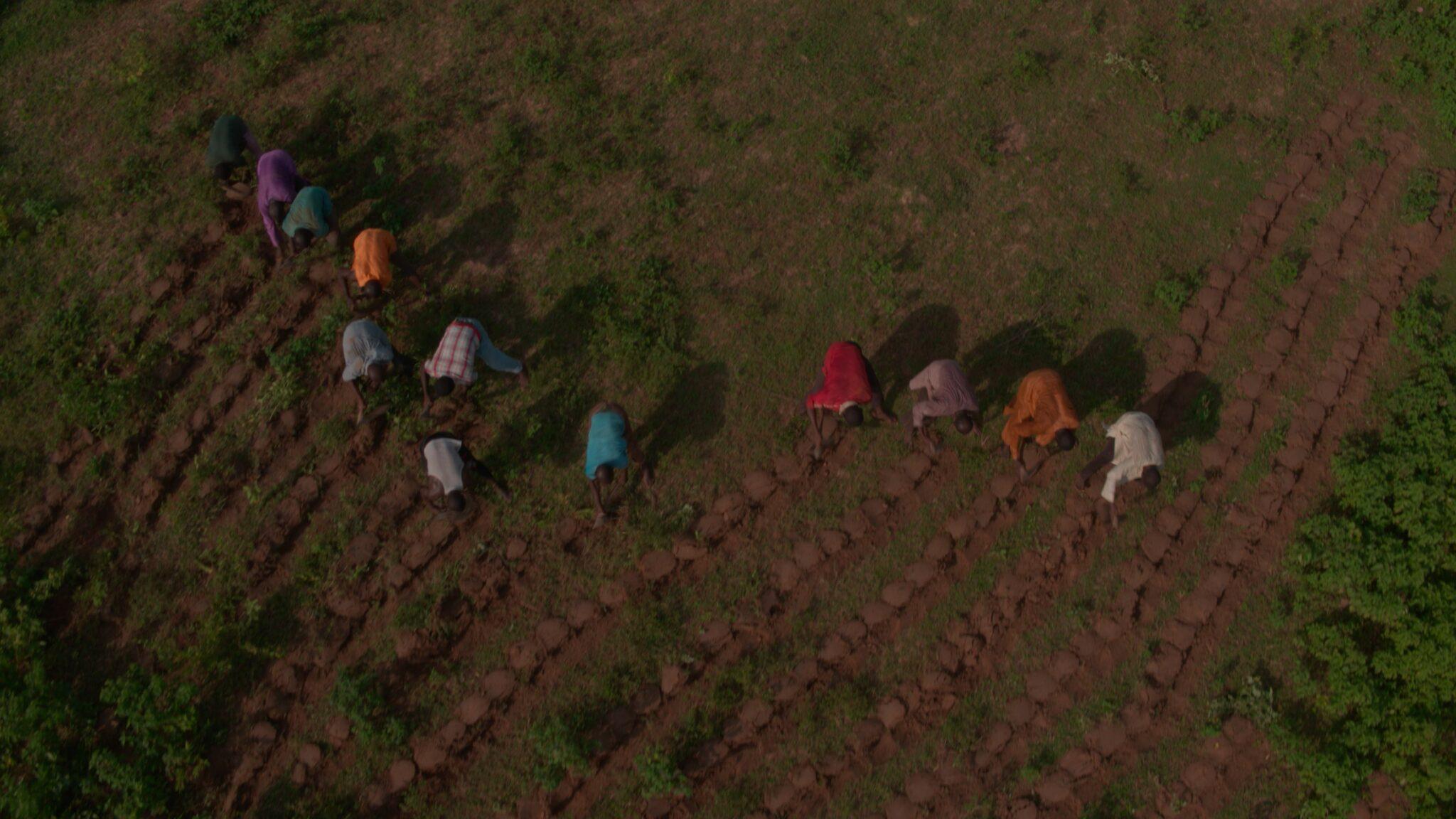 Ein paar afrikanische Bauern pflanzen in bunten Shirts mehrere Reihen neuer Bäume. Bei der Szene aus The Great Green Wall handelt es sich um eine Drohnenaufnahme.
