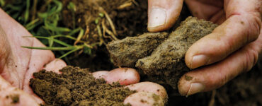 Zwei Hände mit einer aus dem gesunden Boden entnommenen Probe.