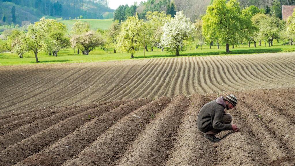 Bio-Landwirt Achim Heitmann hockt auf seinem Acker und prüft seine gepflanzten Zwiebeln.