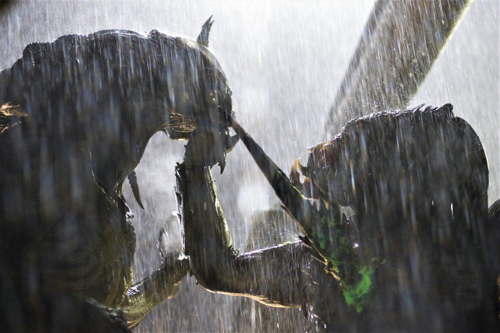 Im strömenden Regen treffen ein Alien und ein Predator aufeinander - Neu auf Disney+ im Juni 2021